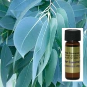 Eucalyptus Oil one dram glass container